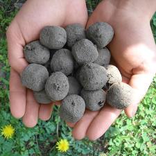 Saatbomben-Set - Verwandeln Sie öde Freiflächen in 4 bis 8 Wochen in blühende Blumenfelder.
