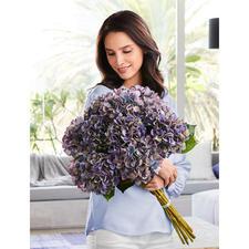 Hortensienstrauß - Blüten von unvergänglicher Schönheit. Als elegantes Dutzend wie vom Floristen fertig gebunden.