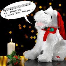 """Singender Weihnachtshund - Der kleine Charmeur singt für Sie den Welthit """"White Christmas"""" – mit inbrünstiger Mimik und Gestik."""