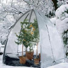 Pflanzen-Iglu - In nur 20 Minuten parat: das perfekte Winterquartier für Ihre Kübelpflanzen.