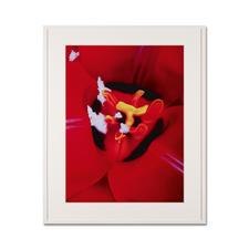 Marc Quinn – Close Up 1 - Fotorealistische Edition des britischen Weltstars Marc Quinn. 100 Exemplare. Maße: 75 x 100 cm