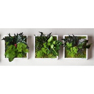 Echtpflanzenbilder Geniale Wand-Begrünung aus Echtpflanzen. Speziell entwickelte Konservierung: 100 % Natur – 0 % Pflege.