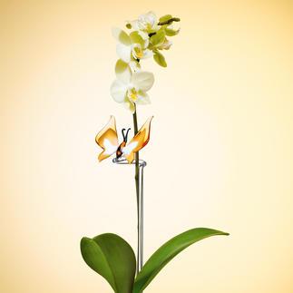 """Orchideenstab """"Kolibri"""" oder """"Schmetterling"""" Handgefertigte Glaskunst gibt Ihren Orchideen festen Halt. Aus feinstem Farbglas und stützendem Klarglasstab."""