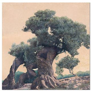 Ingo Wegerl – Olivenbaum Ingo Wegerls zweite Leinwandedition – zu 100 % handüberarbeitet. Niedrig limitiert – in zwei Größen erhältlich. Maße:  140 x 140 cm