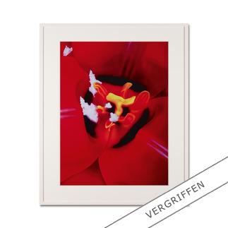 "Marc Quinn: ""Close Up 1"" Fotorealistische Edition des britischen Weltstars Marc Quinn. 100 Exemplare."