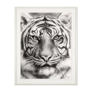 Koshi Takagi – Eyes of the tiger Fotorealistische Bleistiftzeichnung. Mit über 1 Million handgemalten Strichen. Koshi Takagis erste Edition seiner Raubkatzen-Serie. 90 Exemplare.
