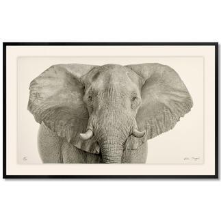 Koshi Takagi – Grauer Riese Fotorealistische Bleistiftzeichnung. Mit über 1 Million handgemalten Strichen.  Koshi Takagis neueste Edition. 30 Exemplare. Maße: gerahmt 150 x 95 cm