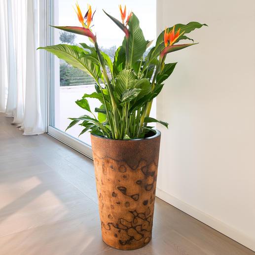 Palmholz-Pflanztopf - Exotischer Pflanztopf. Oder außergewöhnliche Bodenvase. Aus seltenem, argentinischem Palmholz.
