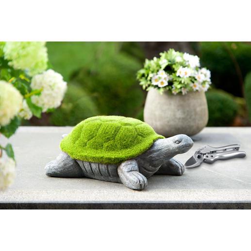 Moos-Schildkröte - Symbol für Weisheit, Harmonie und langes Leben. Zudem ein Blickfang, der schmunzeln lässt.