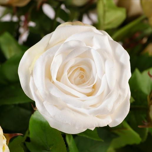 Rosenstrauß Avalanche