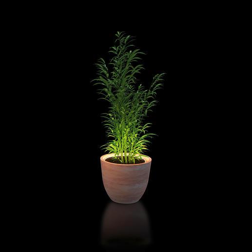Beleuchtungsring für Pflanzen Setzen Sie Ihre Pflanzen effektvoll in Szene. Umrahmt sie stilvoll mit warmweißem Licht.