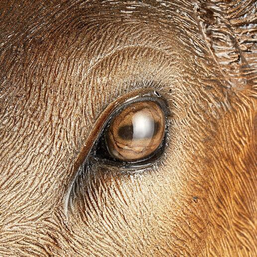 Die sanften, strahlenden Augen bannen den Blick jedes Betrachters.
