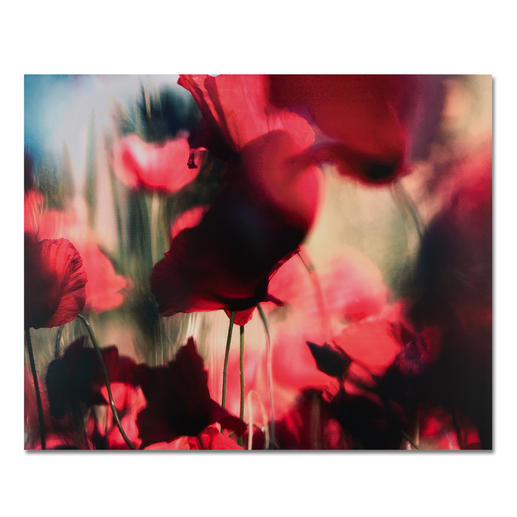 """Sabine Wenzel: """"Mohn Nr. 3"""" - Ein typischer Wenzel: Einzigartige Kombination von Fotografie und Unschärfe – erstmals auf Aludibond. 30 Exemplare."""