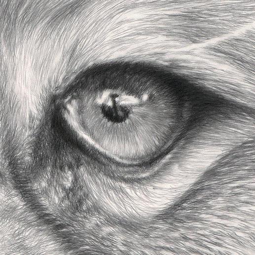 Über 1 Million handgemalte Bleistiftstriche lassen das Werk fotorealistisch wirken.