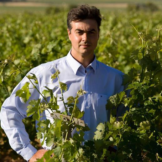"""Soplo 2013, Rafael Cambra, Valencia, Spanien Für 12 US$ hält Parker ihn für ein """"großartiges Schnäppchen"""". (Wine Advocate 225, 05/2016) Hier ist er 40 % günstiger."""