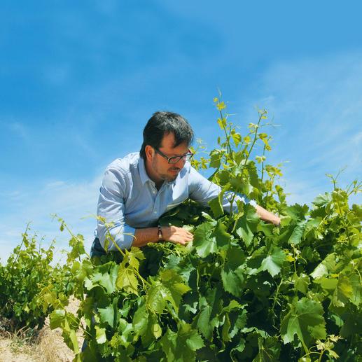 Tempranillo Blanco 2016, Rodríguez Sanzo, Rioja, Spanien Weißer Tempranillo? Ja – doch äußerst selten.