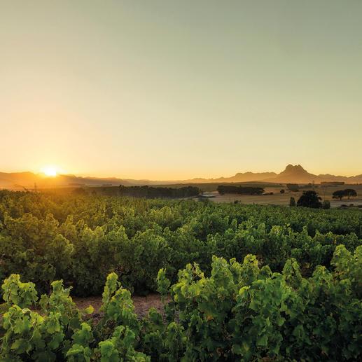 Skaapveld Shiraz 2015, MAN Family Wines, Stellenbosch, Südafrika Einen besseren Shiraz unter 7 € haben wir nicht gefunden.