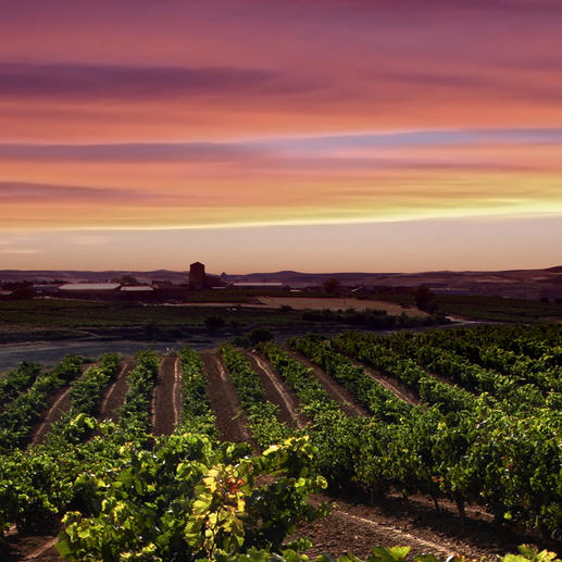 Legón Premium 2014, Bodegas Viña Vilano, Ribera del Duero, Spanien Der Preis-Genuss-Sieger. Unter 101 verkosteten Weinen der Ribera del Duero. (Decanter World Wine Awards 2017, www.decanter.com)