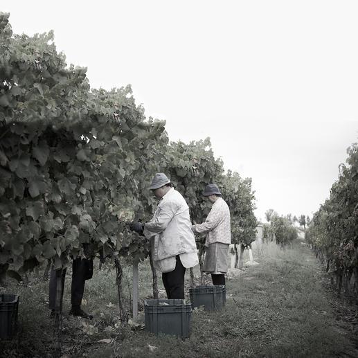 """Cabriz 2016, Quinta da Cabriz, Dao, Portugal 3.082 (!) Weine unter 12 $ verkostet. Hier ist der Sieger. (""""Wine & Spirits"""", August 2017)"""