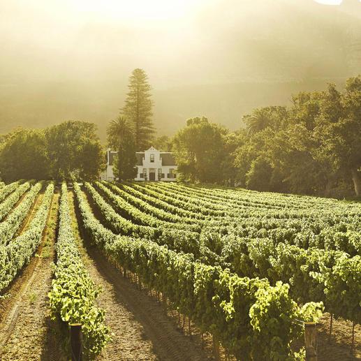 """Christine 2010, Buitenverwachting, Constantia, Südafrika Einmal im Jahr gibt es einen neuen """"Christine"""". Aber nur 2 Stunden lang."""