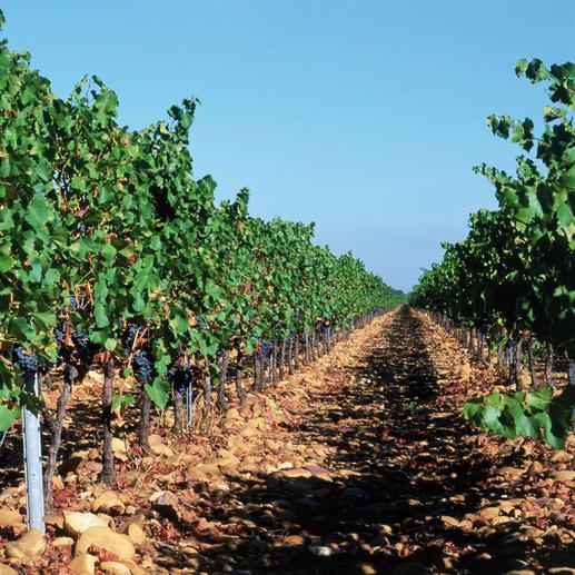 Premier Terroir 2015, Château Beauchêne, Côtes du Rhône AOC, Frankreich Ein Glück, dass dieser Wein nicht Châteauneuf du Pape heißen darf.